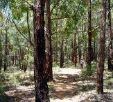 Bibbulmun Track: Kalamunda National Park. Western Australia.
