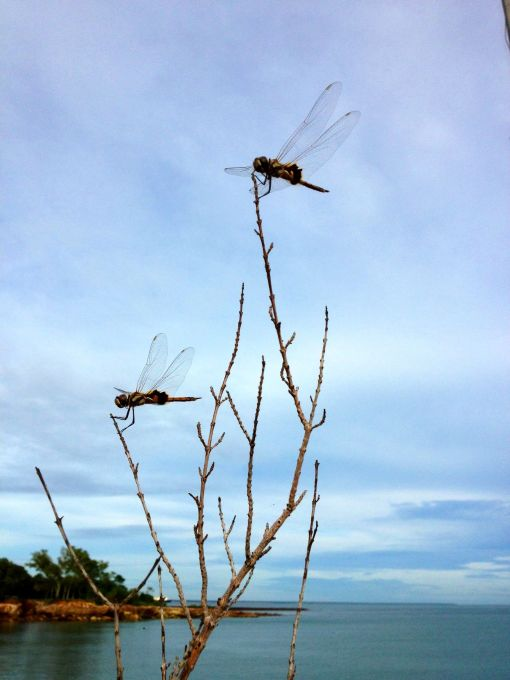 Dragonfly dawn: the change of seasons in the Northern Territory.