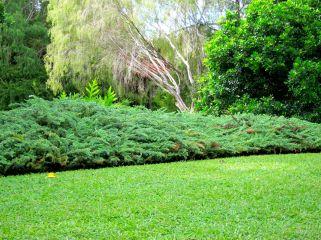 Chinese Garden, Darwin. NT.
